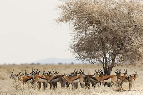 Safaris parcs du Nord