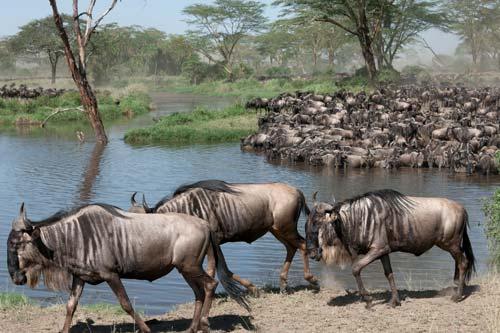 Safarie en Tanzanie