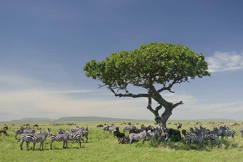 Stage faune sauvage Tanzanie